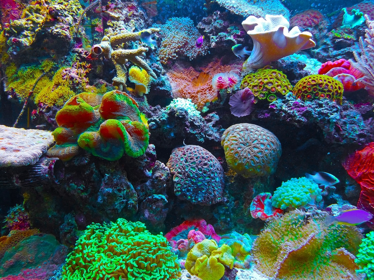 coral-reef-sea